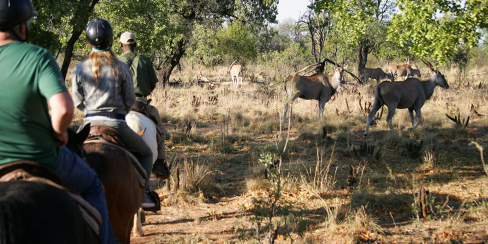 Kwafubesi Tented Camp horseback safari with eland