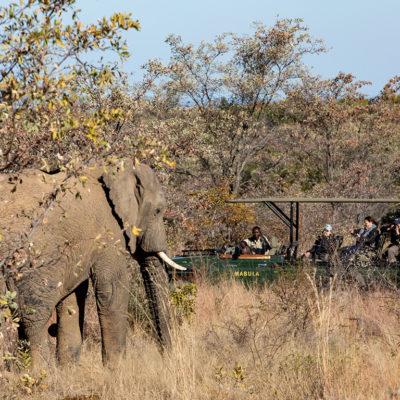 Kwafubesi Tented Camp elephant and safari vehicle