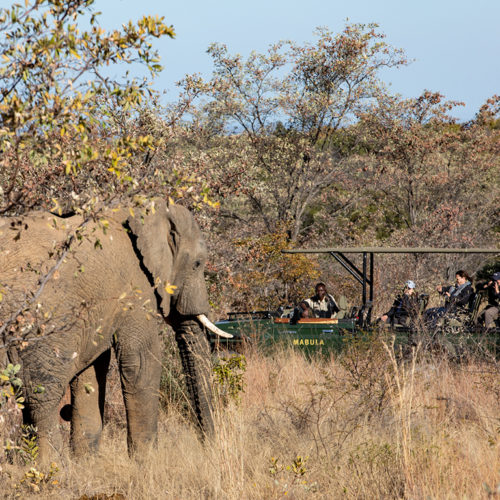 Kwafubesi Tented Camp elephant and safari vehicle