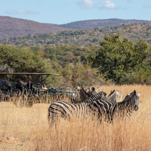 Kwafubesi Tented Camp zebra and safari vehicle
