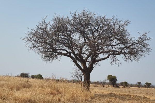 2021Mabula-GuidesNews-August-03